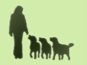 .: Hundeschule – Verhaltensberatung :.