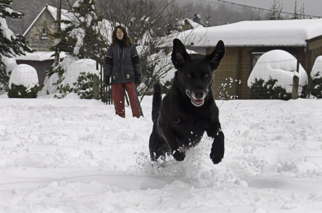 Hund im Sprung im Schnee