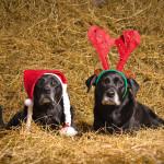 Hunde Weihnachtsmütze Rentierhörner